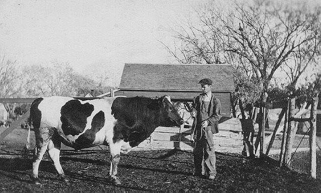 Farm Animals On A Kansas Farm In The 1920 S